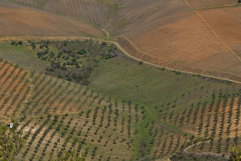 Campos de olivares y viñedos, Portugal