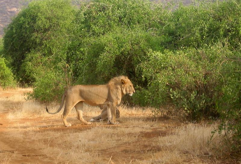 Leon de Kenia