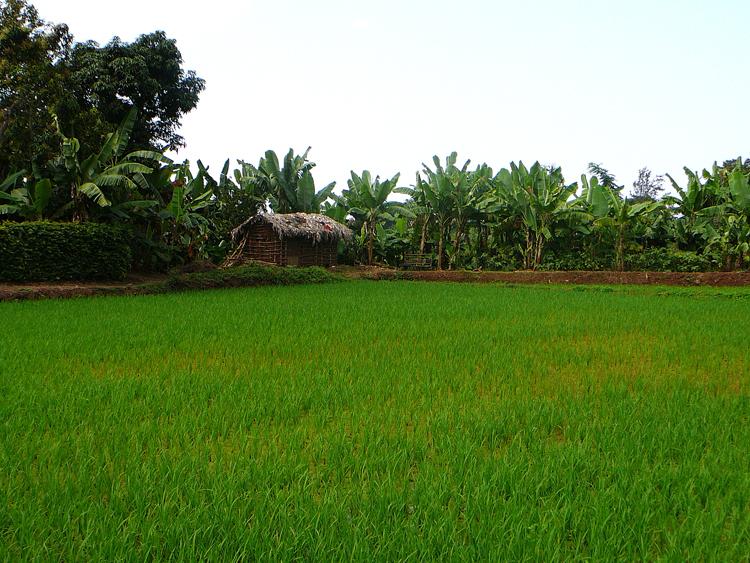 Plantaciones