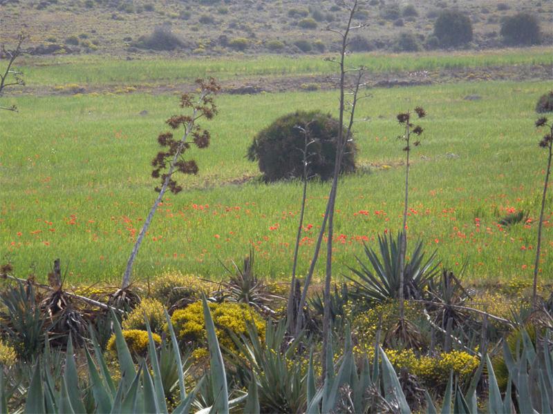 Campos de cereal, Cabo de Gata