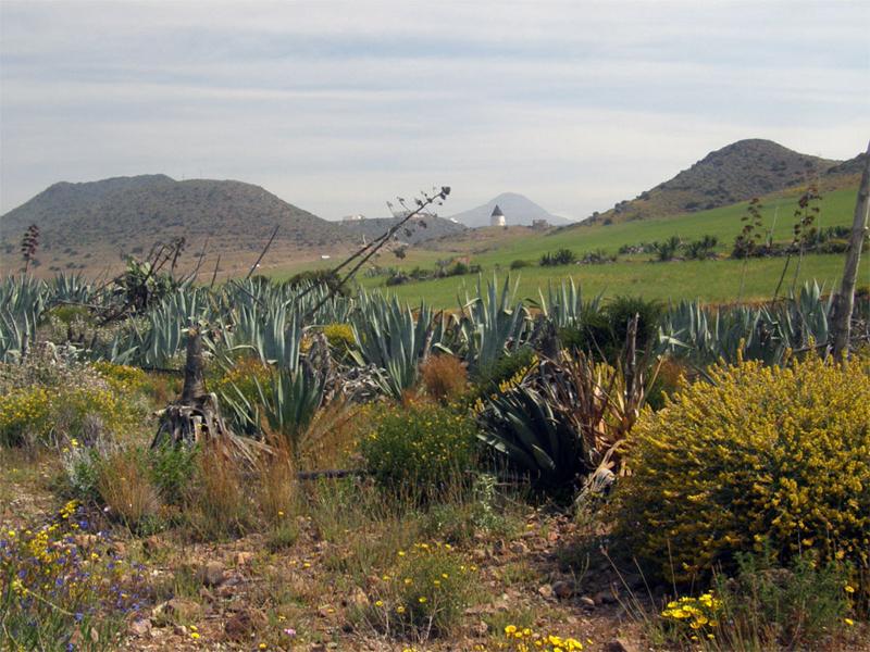 Campos de Pitas