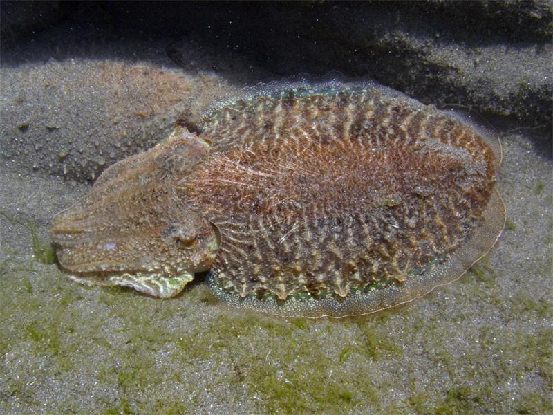 Fauna marina, Cabo de Gata