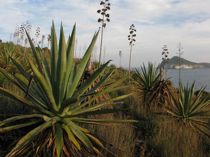 Pitas, Parque Natural del Cabo de Gata
