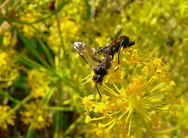 Avispas recolectando el polen