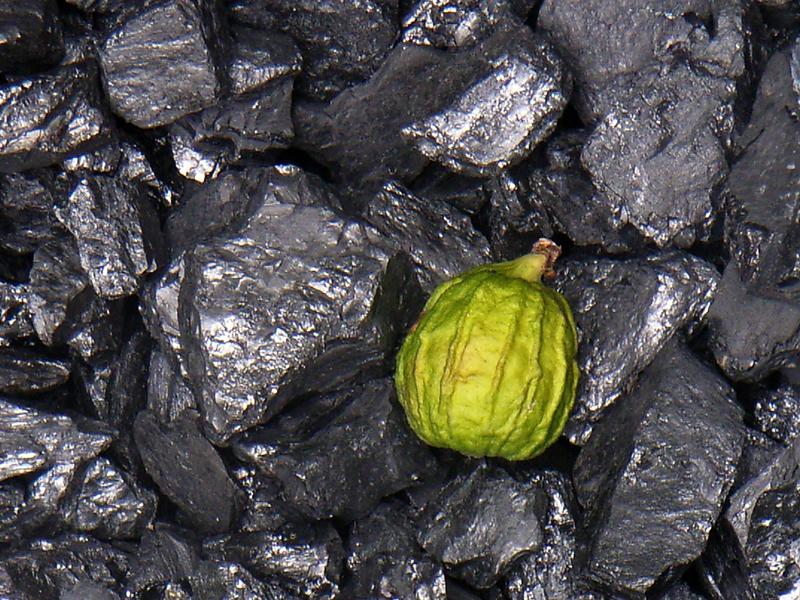 Carbón Mineral, Calabaza