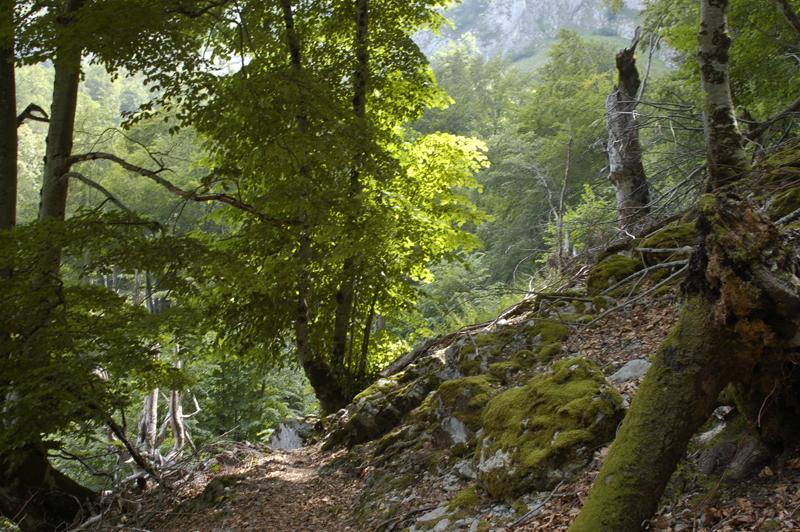 Bosque de Corona