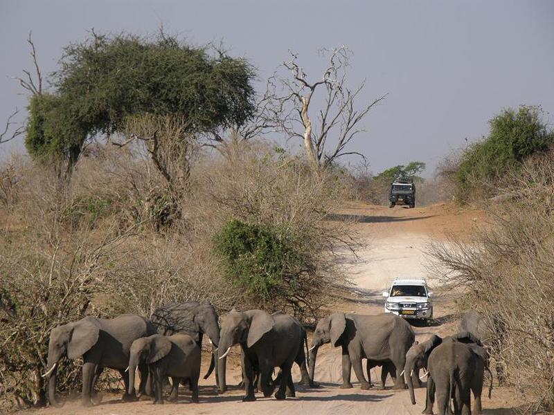 Parque Nacional del Chobe