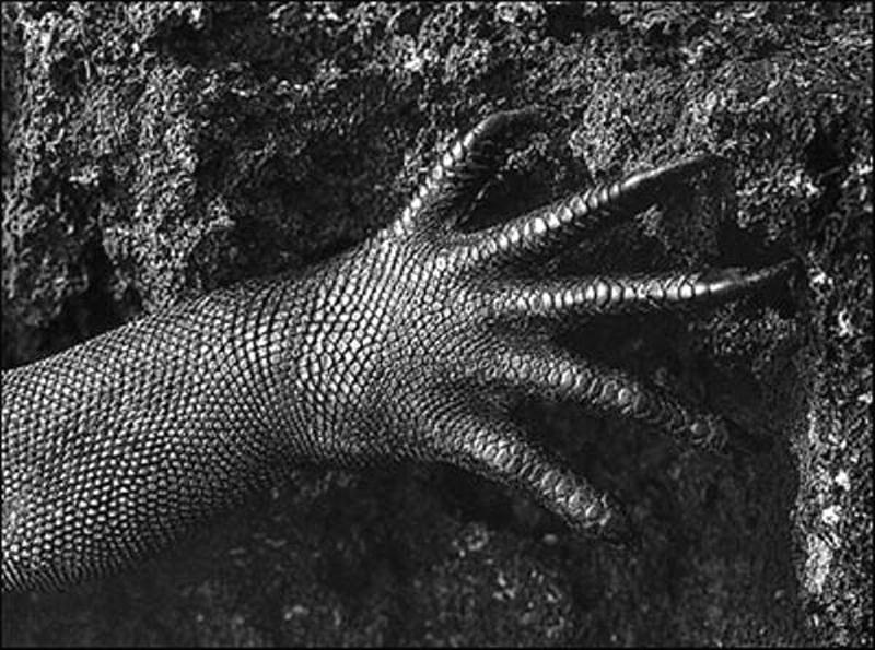 amazonas-proyect-genesis