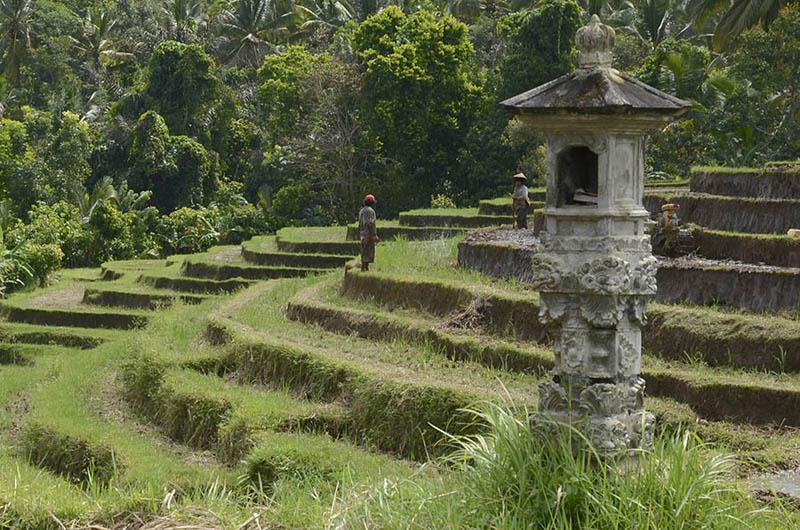 Altar para ofrendas