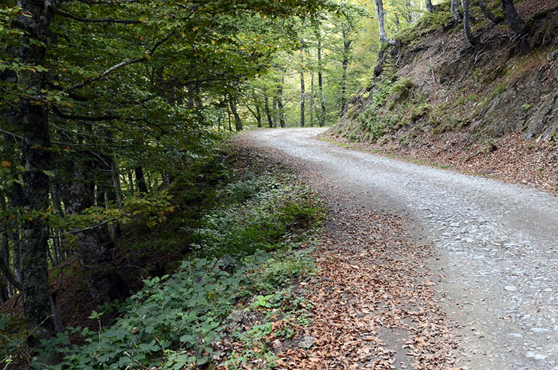 Camino de Vegabaño