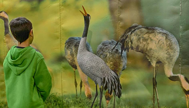 feria internacional de turismo ornitologico