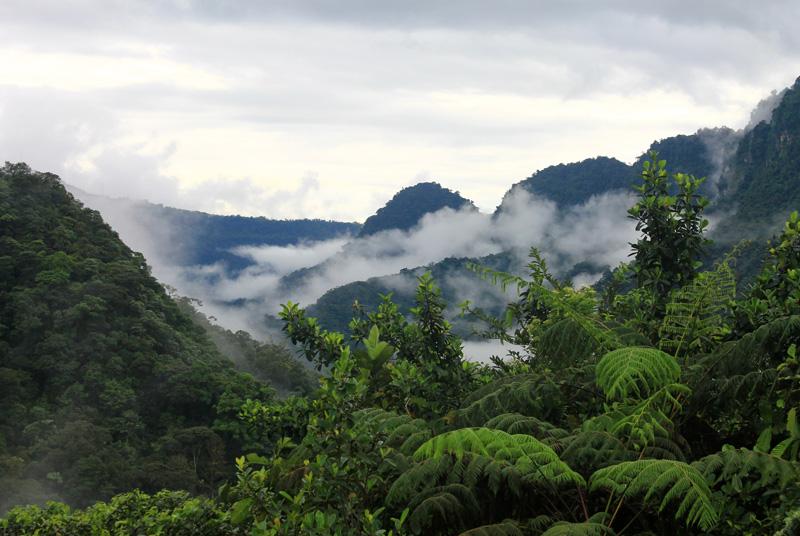 Contaxto Andes Amazonía