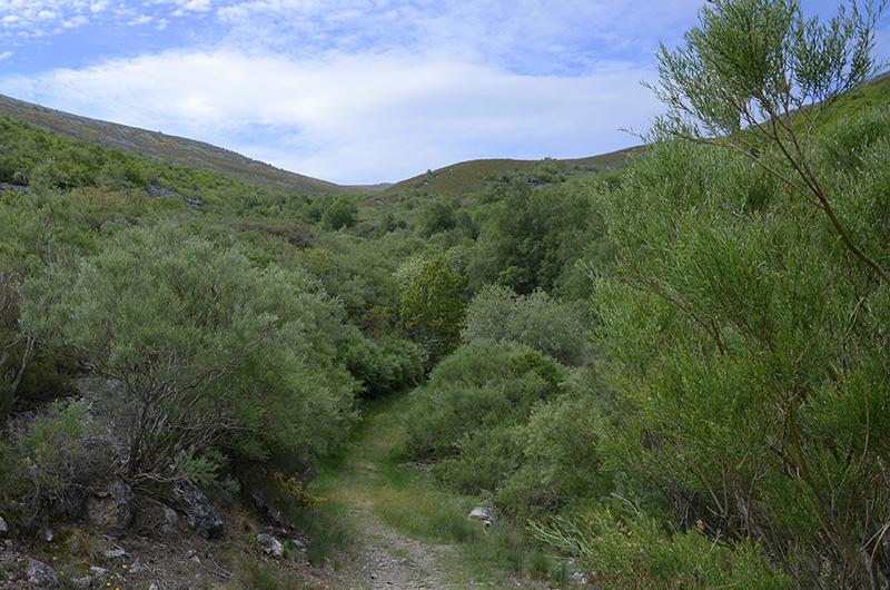Camino del Lago, Sierra de Cabrera, León