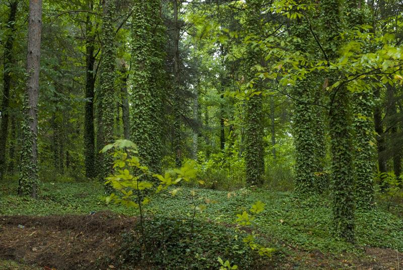 Bosque de Castaño de San Martín, Sierra de Gara Rafa Álvarez
