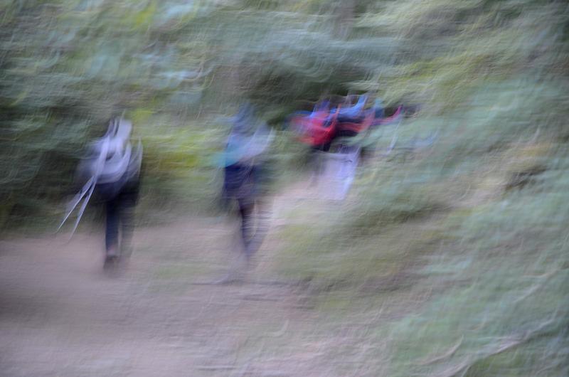 25entramos-en-el-bosque