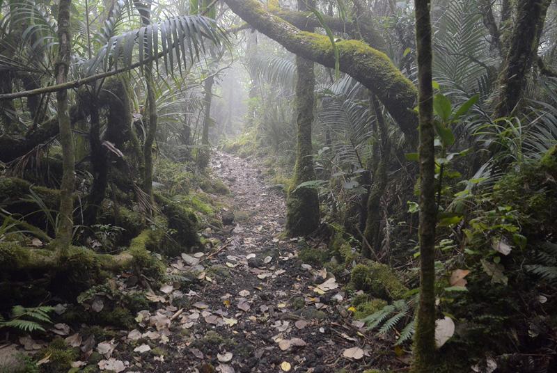 Basse Vallée, isla de la Reunión