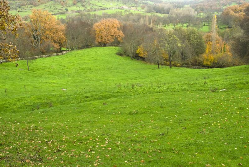 8c772370a Un paseo por el bosque encantado de Béjar