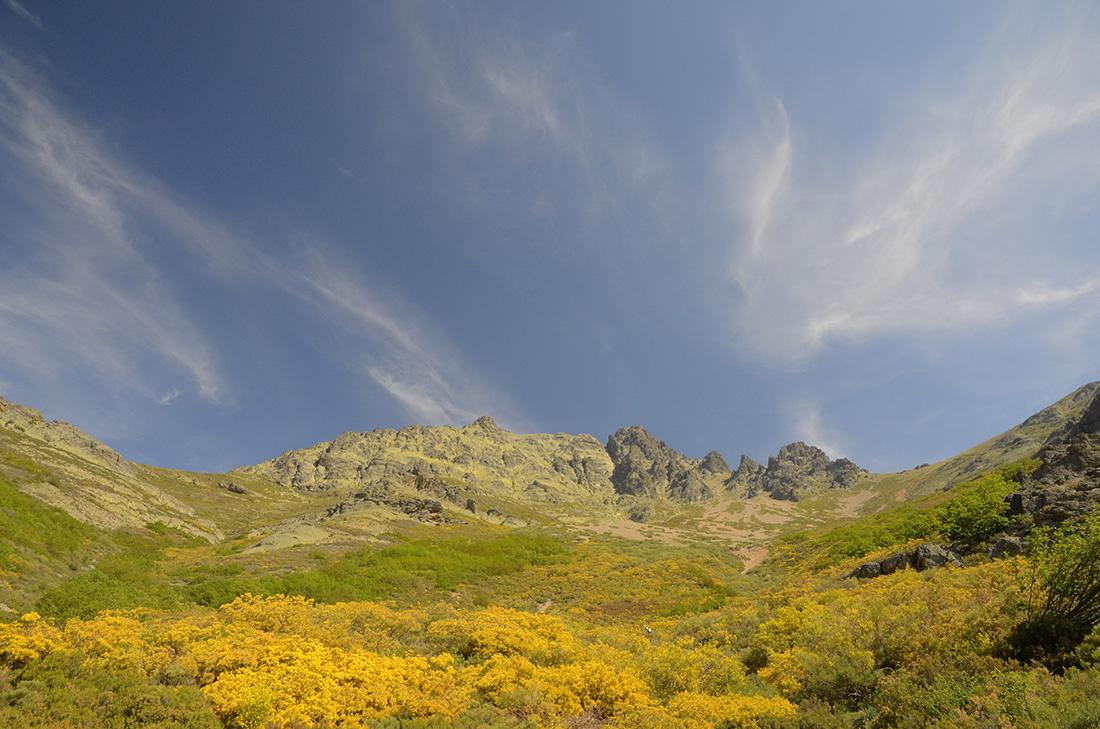 Floración, Montaña Palentina