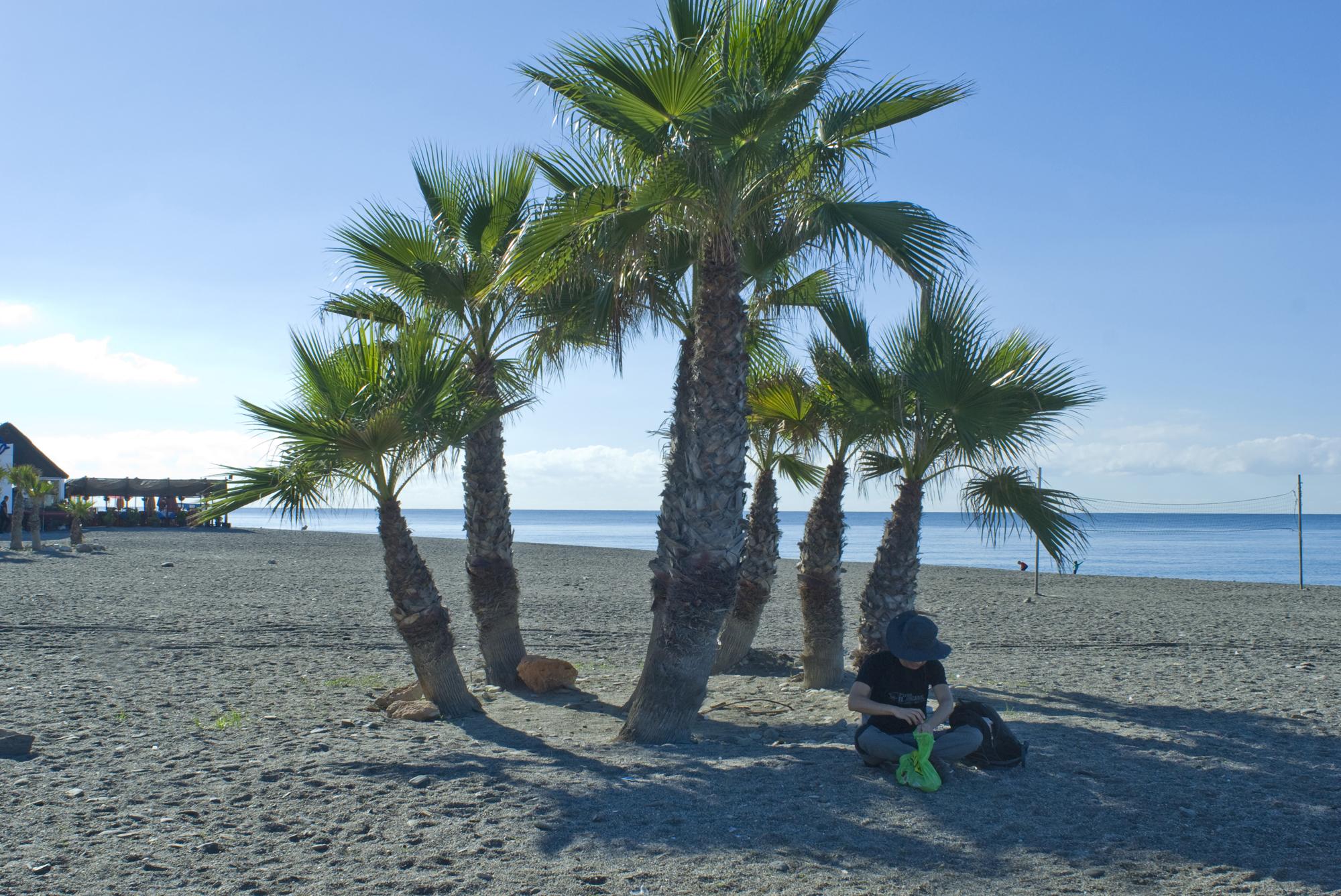 Palmeras en la playa de la Guardia-Salobreña-Granada