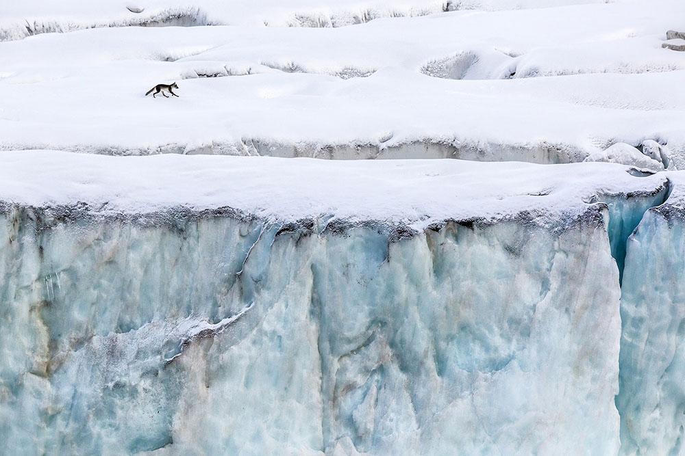 PATROLLING THE ICE FRONT - MARCO GAIOTTI (ITALIA) - Mención de Honor: Tema del Año: Zonas Frias