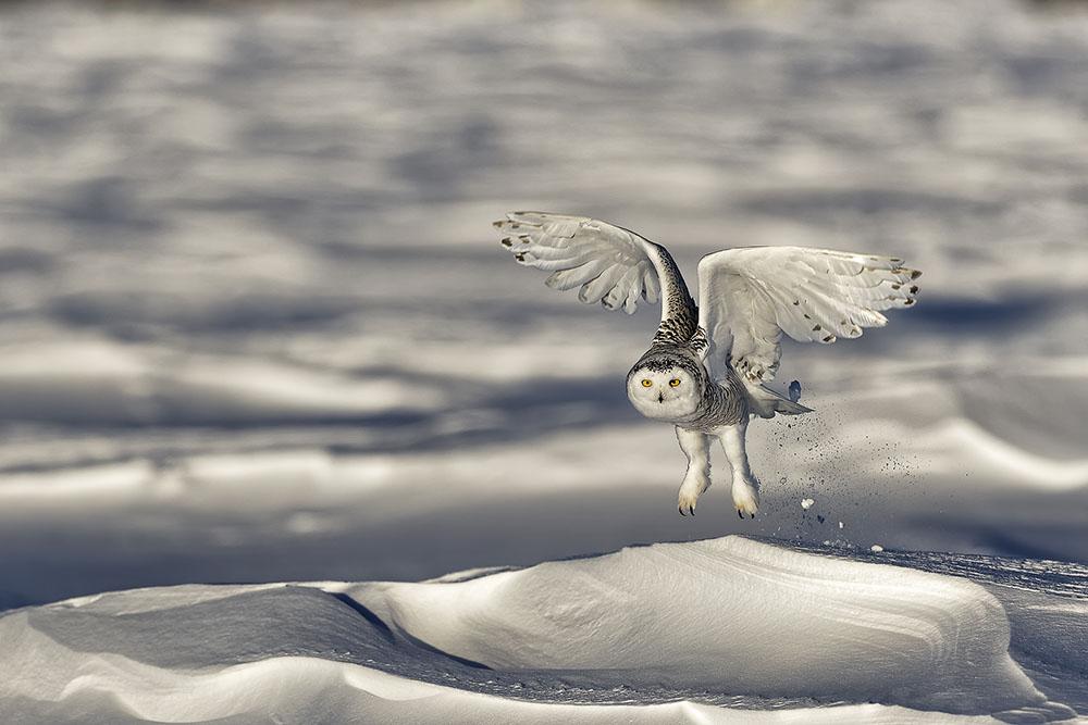 ON THE SNOW - GIOVANNI FRESCURA (ITALIA) - Mención de Honor: Tema del Año: Zonas Frias