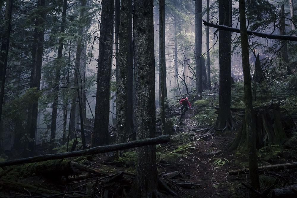 MOODY DAY IN THE FOREST ON NORTH SHORE, CANADA. - JUSTA JESKOVA (CANADÁ) - Mención de Honor: Aventura