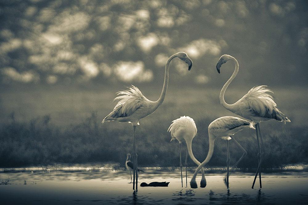 BIRD ART - LALITH EKANAYAKE (SRI LANKA) - Mención de Honor: Mundo de las Aves