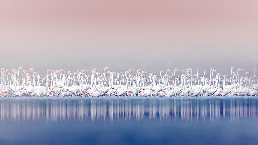 RITUAL DANCE - MARCO GAIOTTI (ITALIA) - Mención de Honor: Mundo de las Aves