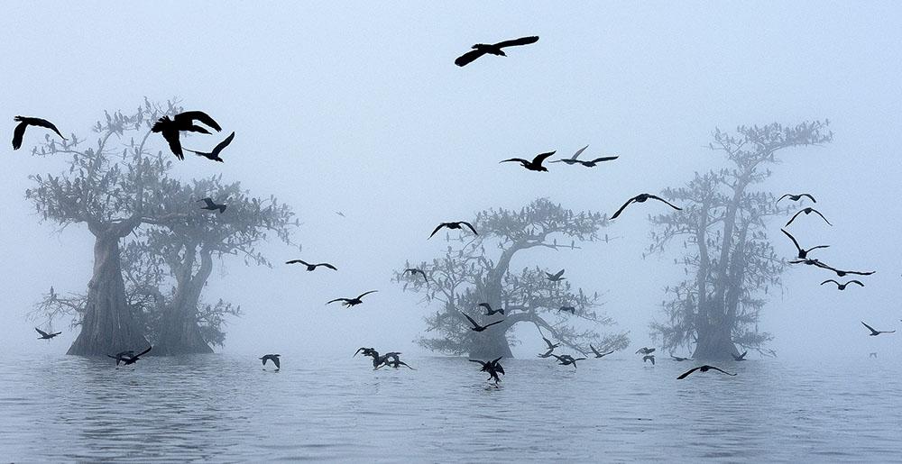 CORMORANTS AND FOG - GEORG POPP (AUSTRIA) - Ganador: Mundo de las Aves