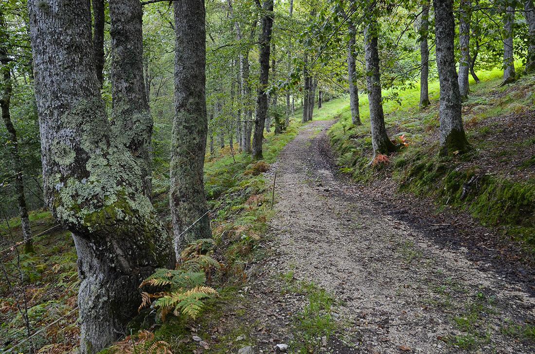 Robledal en la Sierra de Bejes-Cantabria