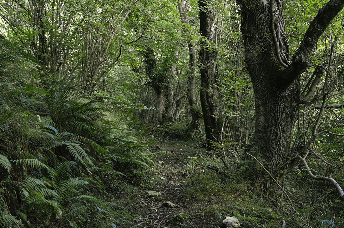Bajada al canal del Urdón-Cantabria