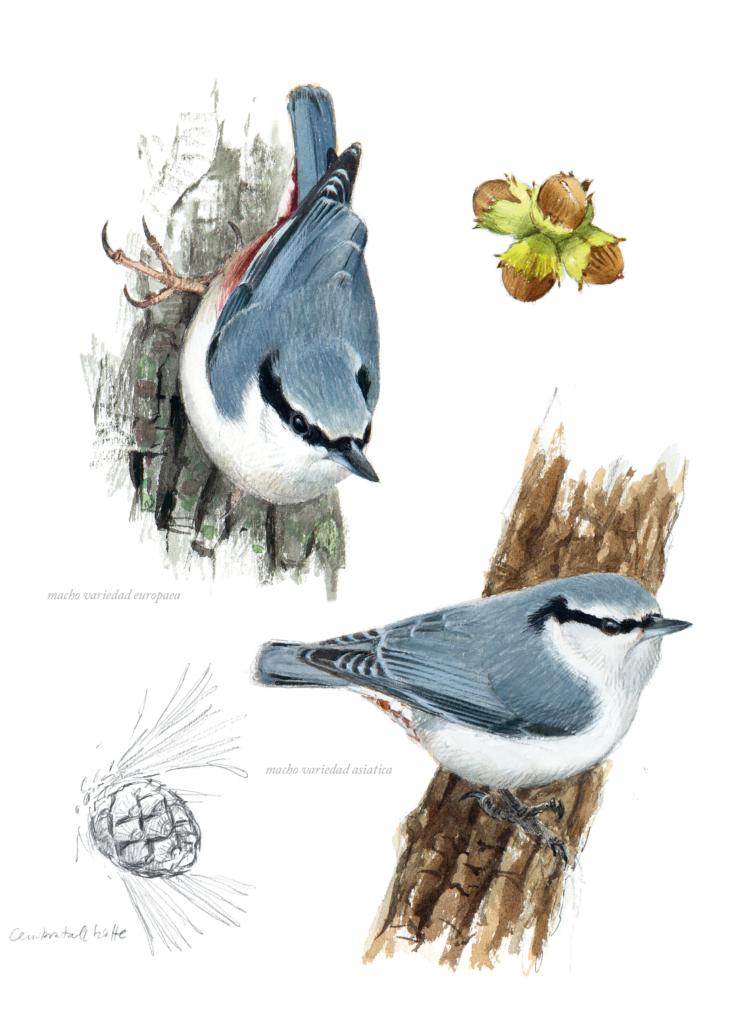 Aves-que-veo-en-invierno