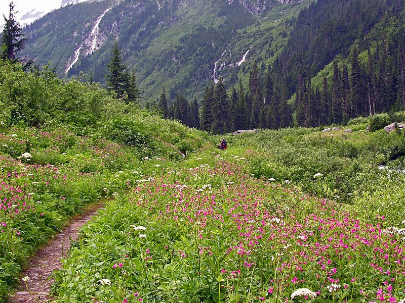 Asulkan valley en Glacier NP