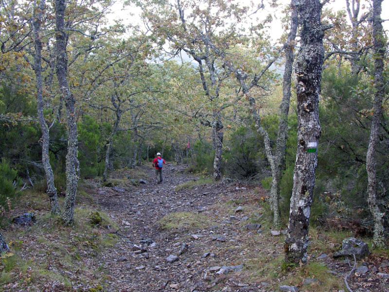 Bajando el bosque de robles