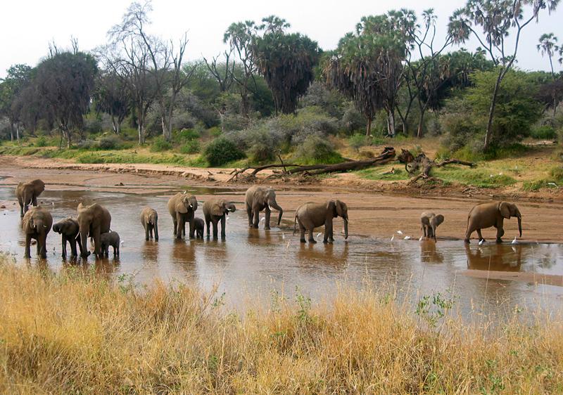 Elefantes de Kenia