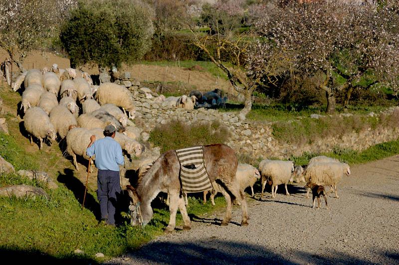 Pastoreando el rebaño