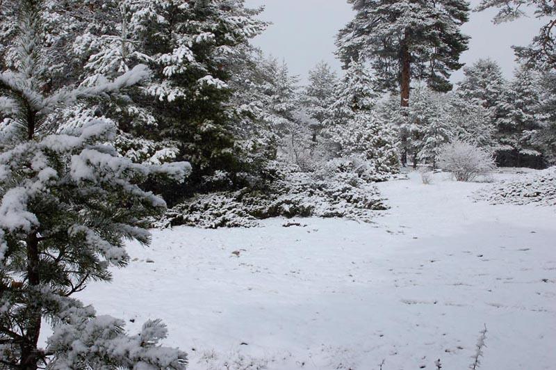 Nevada Frías