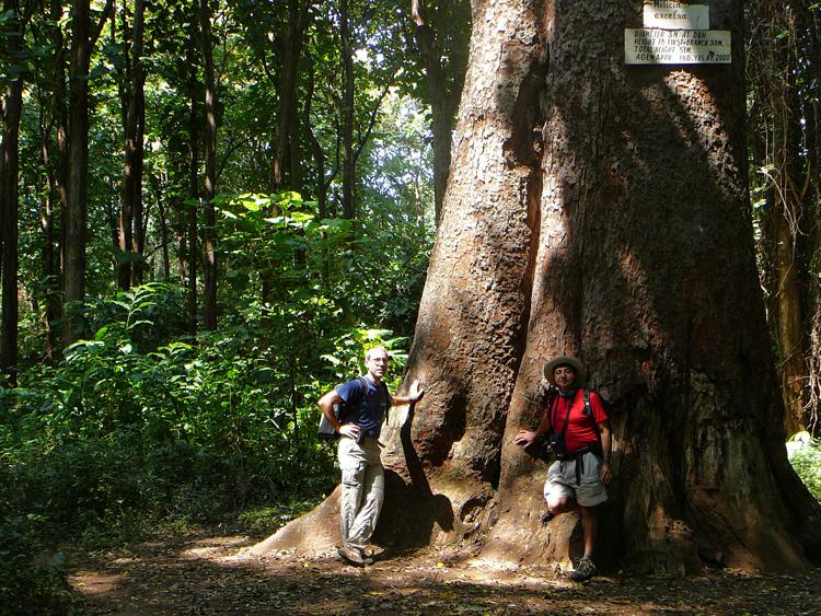 Selva de Tanzanea