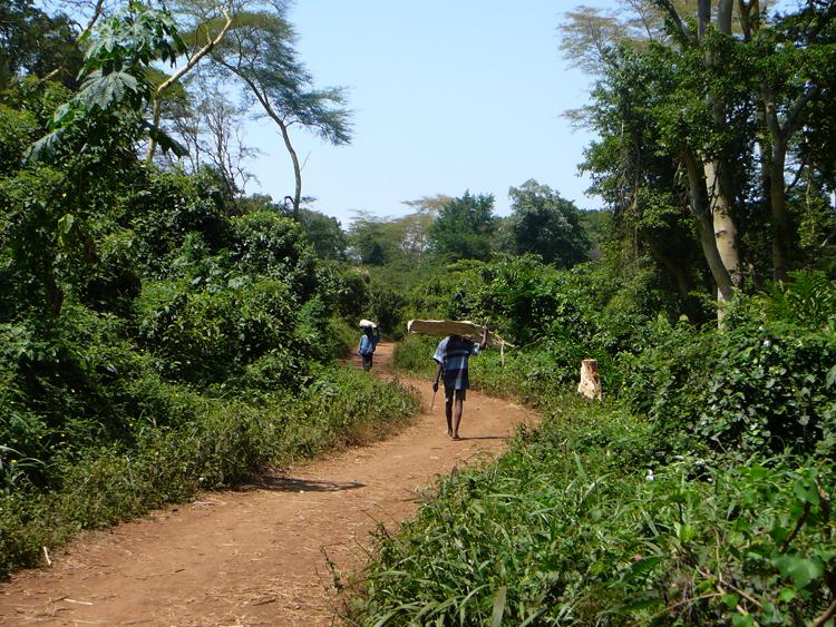 Caminos entre la selva