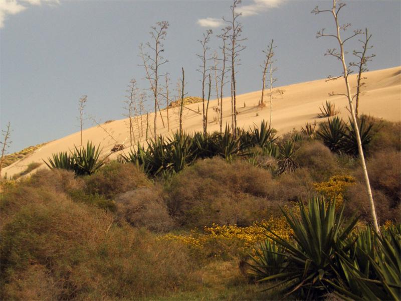 Espacios dunares, Parque Natural del Cabode Gata