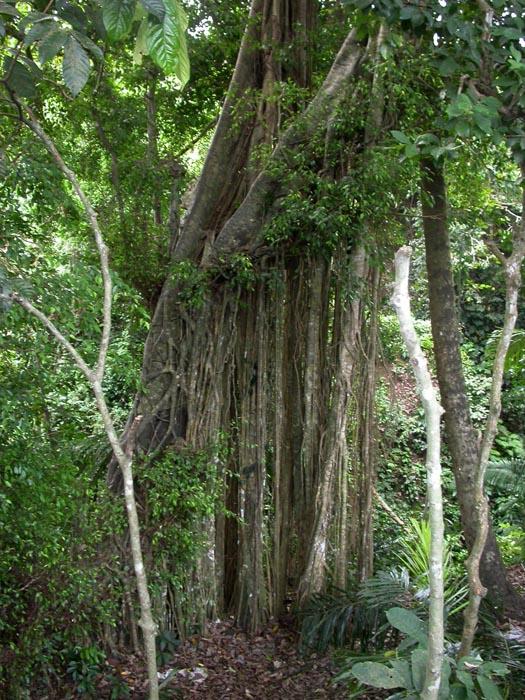 Bosque de los Monos. Ubud