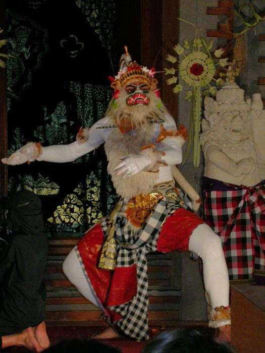 Mono blanco Hanuman. Ballet del Ramayana. Ubud. Ba