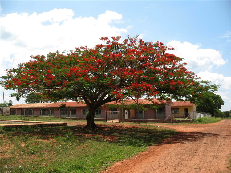 El árbol Chivato