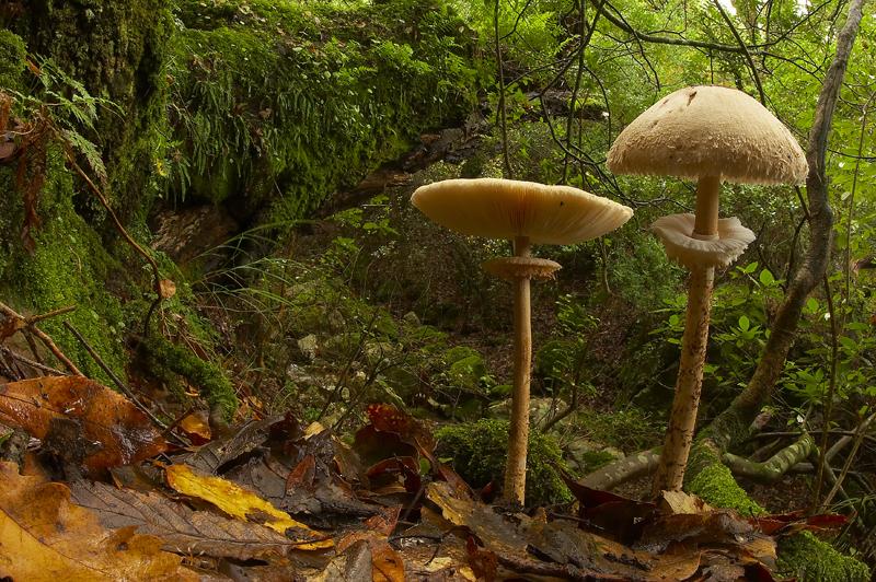TITULO - Simbiosis en los Alcornocales