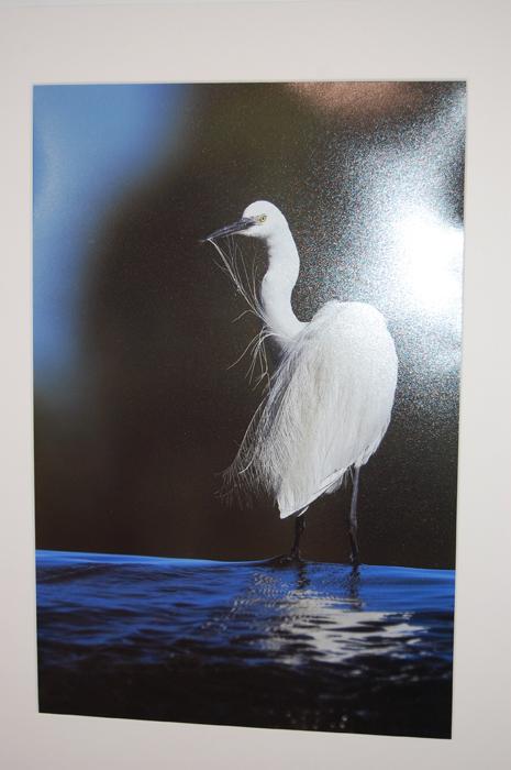 La delgada pluma blanca