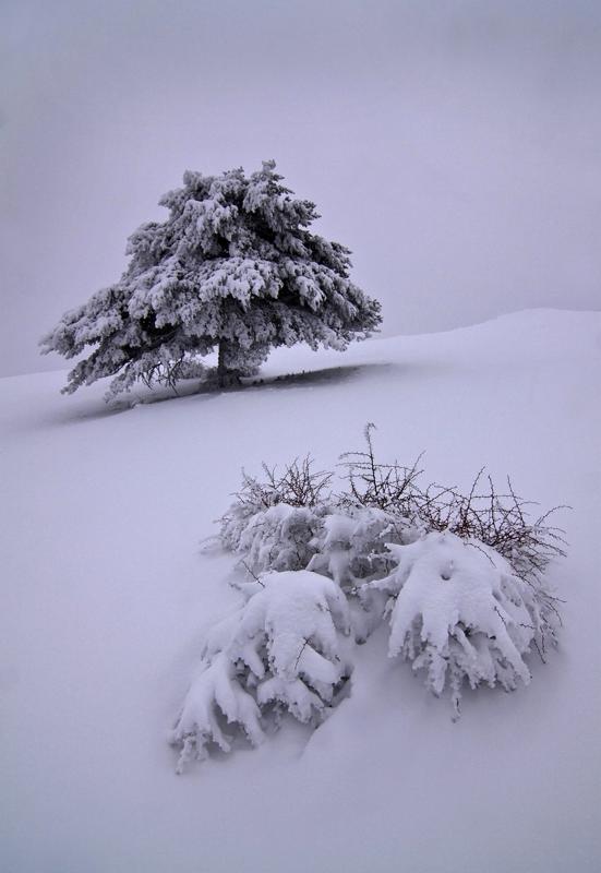 Ernesto sofos snow in silence