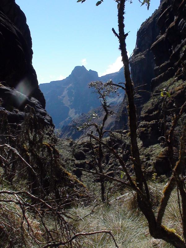 Foto 26 - Bosque de Queñuas