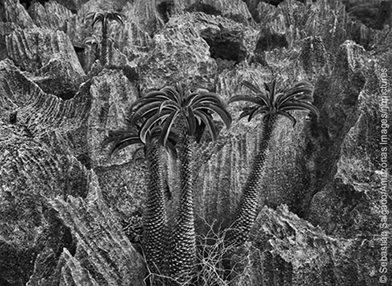 trees-banner_118992_2