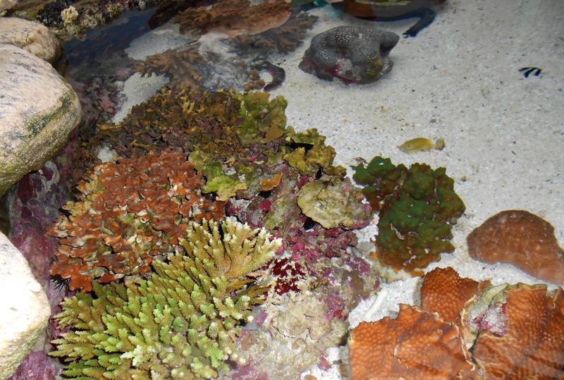 CORAL. Nueva Caledonia