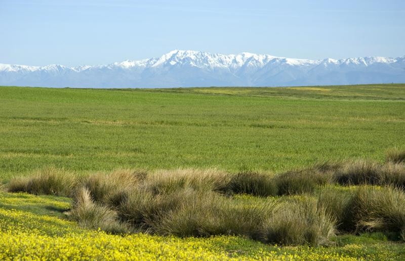 Campos de cereal de Castilla la Mancha, al fondo sierra de Gredos